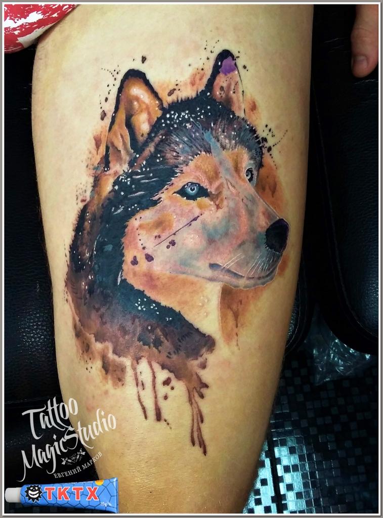 волк акварель татуировка
