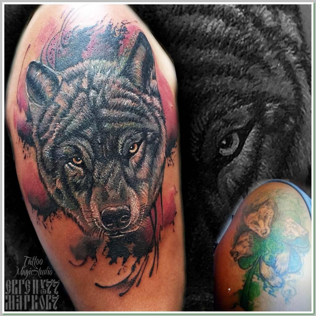 волк кавер перекрытие старой татуировки coverup wolftattoo