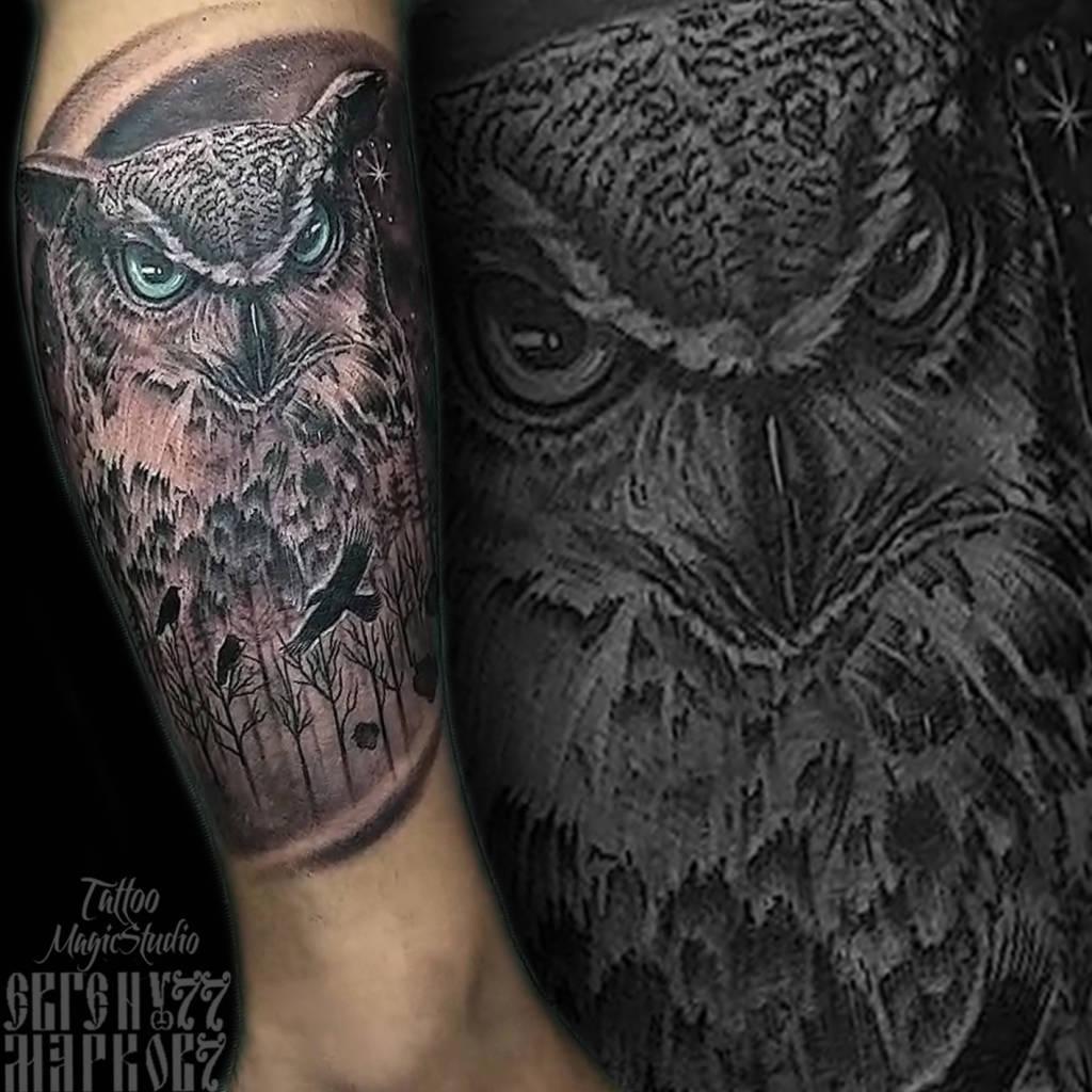 сова ворон лес реализм realistic raven owl forest
